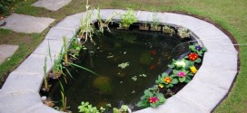 DIY Pond Ideas that will help Improve your Home