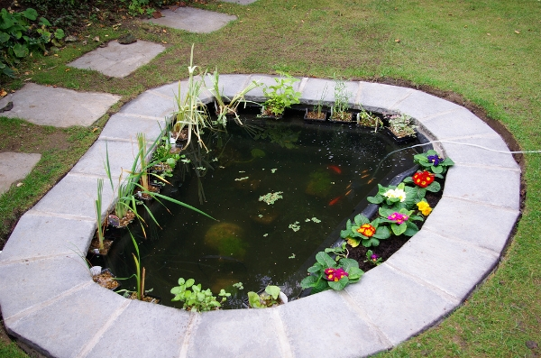 Diy pond ideas that will help improve your home online for Do it yourself fish pond