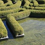 3 Neat Hedge Types That Are Easy To Maintain