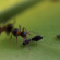 5 Places Around the Home that Ants Love To Nest